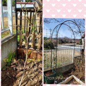 2月19日(水)我が家のバラと小さなサボテン♪