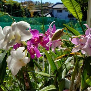 11月23日(月)枇杷の木に初めての花!の巻