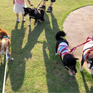日本犬の祭典ZIPANG2019に来ました!