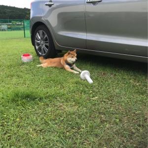 コロ助犬キャンパーへの道…最終回②