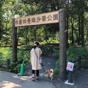 日高市の巾着田へ行ってきました!