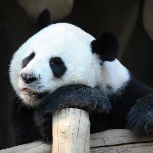 必殺HSK!!!「中国語の勉強をしなくてはいけなくなった!」