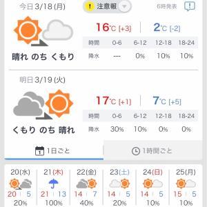 さが桜マラソンまであと6日〜練習計画〜