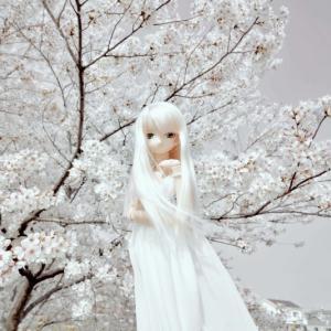 セシリーさんの魅力・・・其の六拾六(女神降臨!)