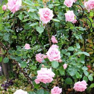 令和元年5月の庭の様子☆