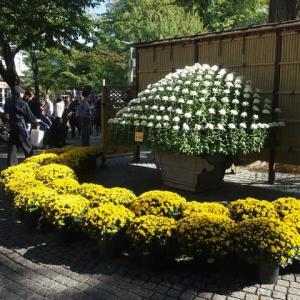 マッキーの『四季を楽しむ』:新宿御苑 菊花壇展