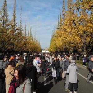 マッキーの『四季を楽しむ』:都内の紅葉を楽しむ散策