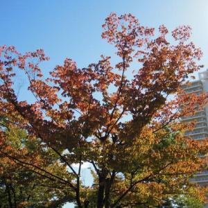 マッキーの『四季を楽しむ』:続・ 季節を感じる日常の風景