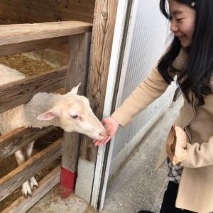 自然体の動物に癒される!マザー牧場のゆかいな仲間たち