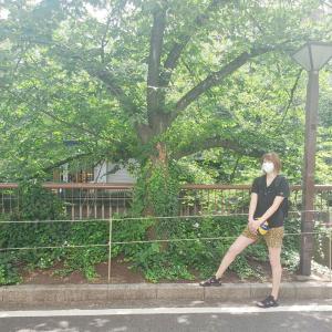 【バレーボール】#狩野舞子さん、雷柄のショートパンツで生足美脚を披露だっちゃ「ラムちゃん」「魅惑のマーメイド」など反響