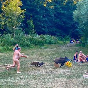 【ドイツ】パソコン返して! 全裸でイノシシ追う男性の写真が話題