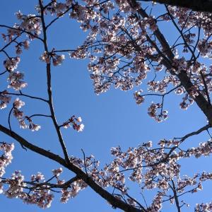 桜の写真を送ったら…