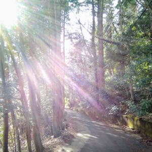 箱根一泊旅行に行ってきました。中編「箱根は本当にパワースポット」だった。