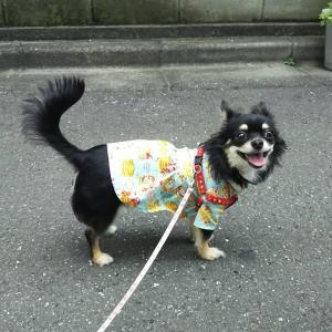 パンケーキ柄の犬服