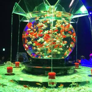 金魚アクアリウム2019見てきました