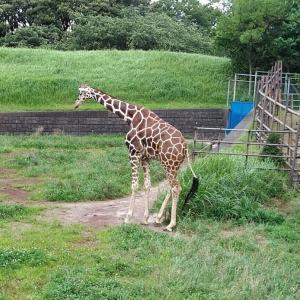 千葉市動物公園へ行ってきました