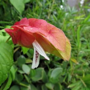 日本の四季と開花 の変化。
