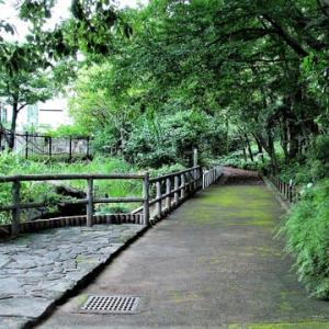 植物園の花散歩 (赤塚植物園)