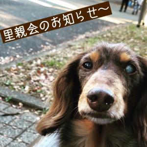 11/16(土)アイドッグ里親会(巣鴨)参加犬決定〜