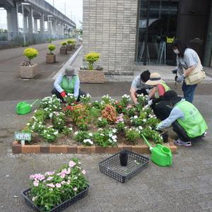 研究学園花いっぱい活動!ボランティアで繋がる輪!