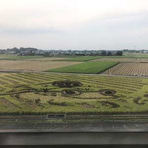 つくばエクスプレスの車窓から素敵な田んぼアートが見られます!