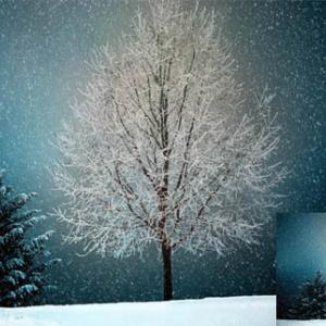 うす汚れた初雪(3)