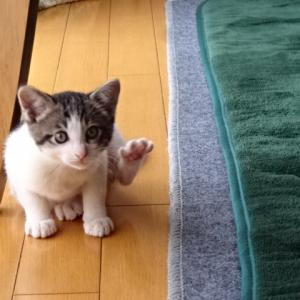 義姉宅の子猫ちゃん5