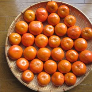 柿の収穫。