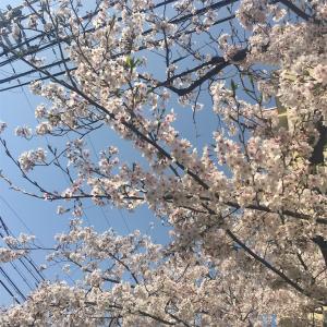 春になったら
