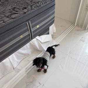 ベッドスカートは便利な差し込み式を使っています。