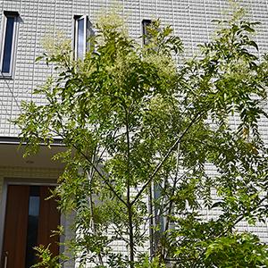 細い窓の利点と断熱効果