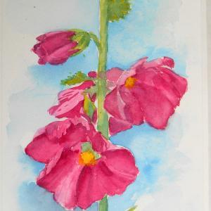 庭に咲いた立葵を描く