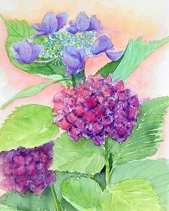 6月の花、アジサイを描く(済生会カルチャー)
