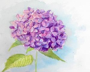 今年最後の紫アジサイ練習
