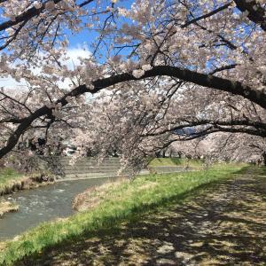 【今日の幸せ】お花見散歩と、駅ピアノ