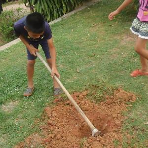 アボガド植樹