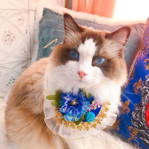お花のゴージャススタイ