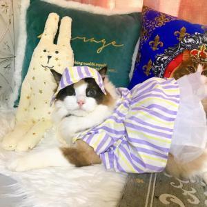 にゃん猫の日ニャンニャンニャン