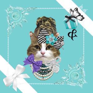 ターコイズブルー猫