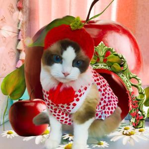 まんまるりんごちゃんになりました