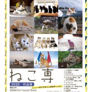 ねこ専 in 渋谷ルデコ 五十嵐健太さん猫写真展