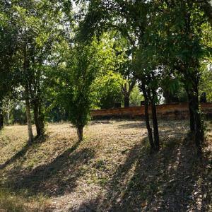 Unknown Ruins / Sukhothai