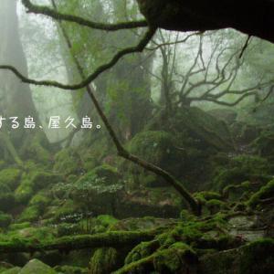 【気象】早くも来た、屋久島でゲリラ豪雨の恐怖!
