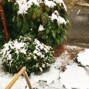 いやー本当に雪が積もってますわ…え、多摩地域に大雪警報?(大汗)