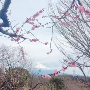 【富士市】子連れランチ*かぐや岩本山カフェで初パンケーキと岩本山公園の梅
