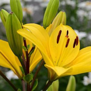 コロナライフを花で癒す