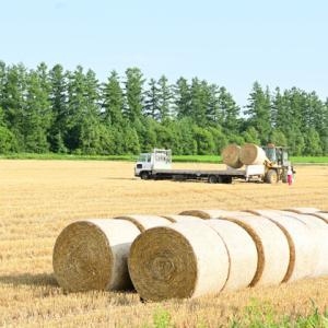 麦稈ロールの風景