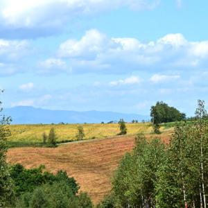 丘の秋色 久々の好天