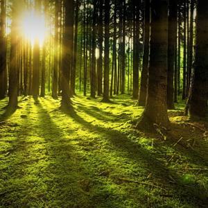 知らない森を一人で歩くのは人生の学びのプロセスの様。