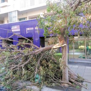 台風被害、皆さまご無事でしょうか?
